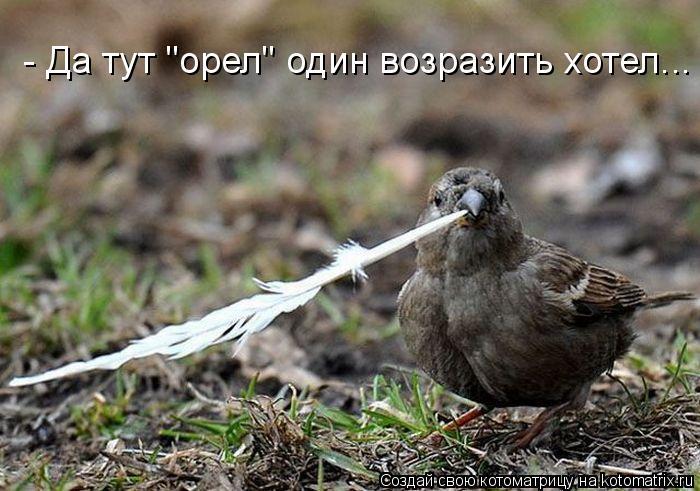 """Котоматрица: - Да тут """"орел"""" один возразить хотел..."""