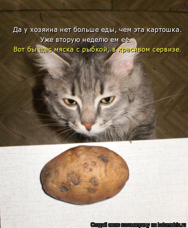 Котоматрица: Да у хозяина нет больше еды, чем эта картошка. Да у хозяина нет больше еды, чем эта картошка. Уже вторую неделю ем её. Уже вторую неделю ем её.
