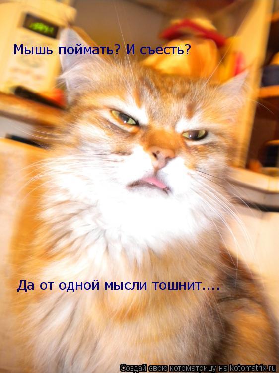Котоматрица: Мышь поймать? И съесть? Да от одной мысли тошнит....