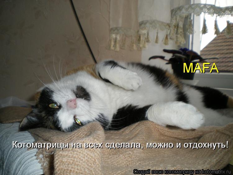 Котоматрица: MAFA Котоматрицы на всех сделала, можно и отдохнуть!