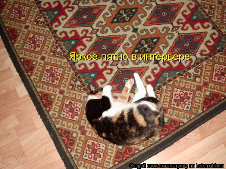 Котоматрица: Яркое пятно в интерьере