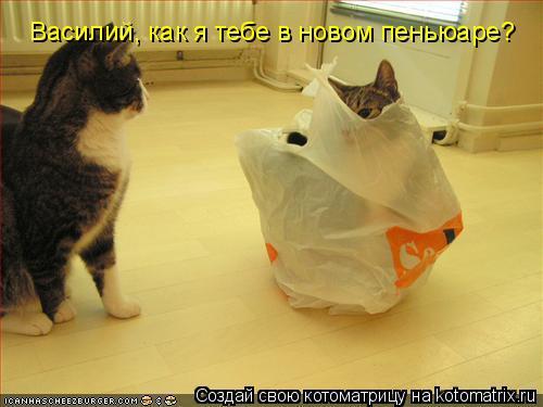 Котоматрица: Василий, как я тебе в новом пеньюаре?