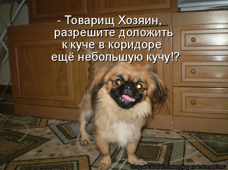 Котоматрица: - Товарищ Хозяин,  разрешите доложить к куче в коридоре ещё небольшую кучу!?