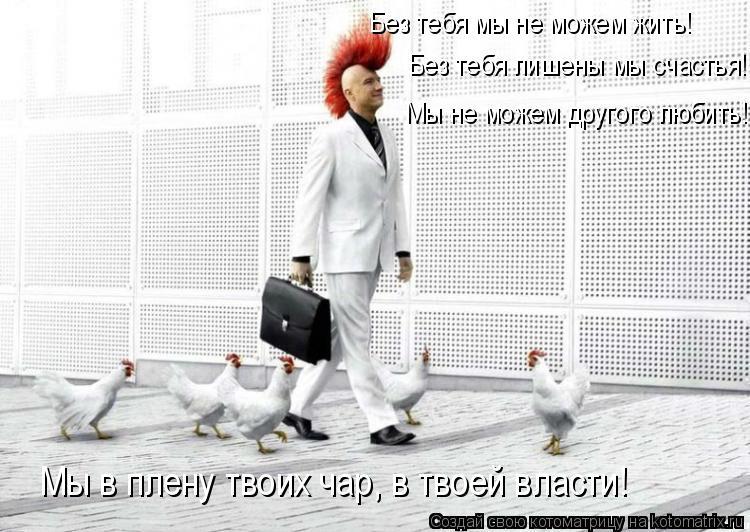 Котоматрица: Без тебя мы не можем жить! Без тебя лишены мы счастья!  Мы не можем другого любить! Мы в плену твоих чар, в твоей власти!