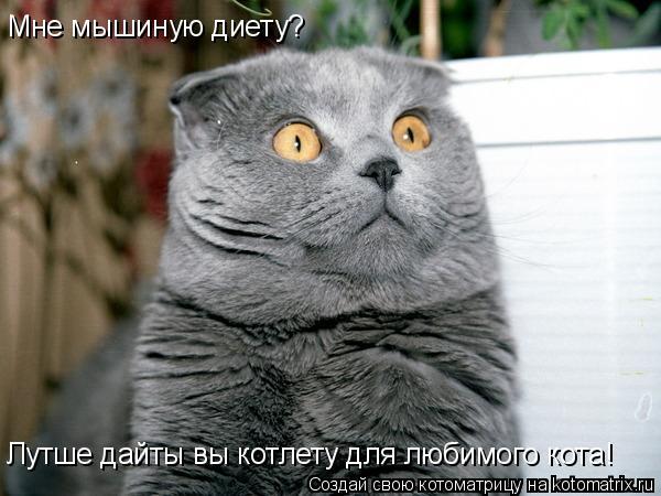Котоматрица: Мне мышиную диету? Лутше дайты вы котлету для любимого кота!