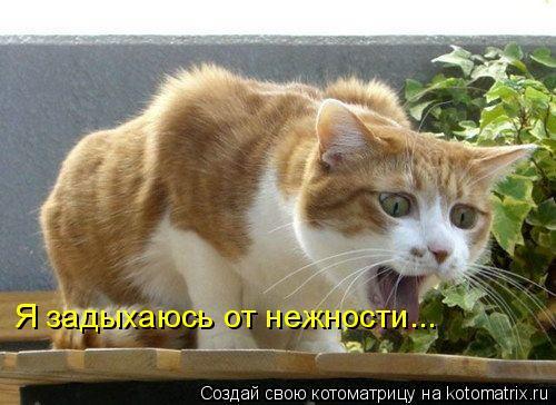 Котоматрица: Я задыхаюсь от нежности...