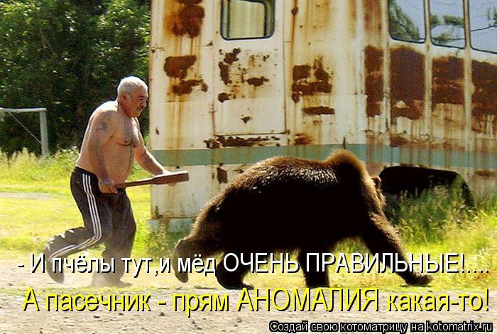Котоматрица: А пасечник - прям АНОМАЛИЯ какая-то! - И пчёлы тут,и мёд ОЧЕНЬ ПРАВИЛЬНЫЕ!....