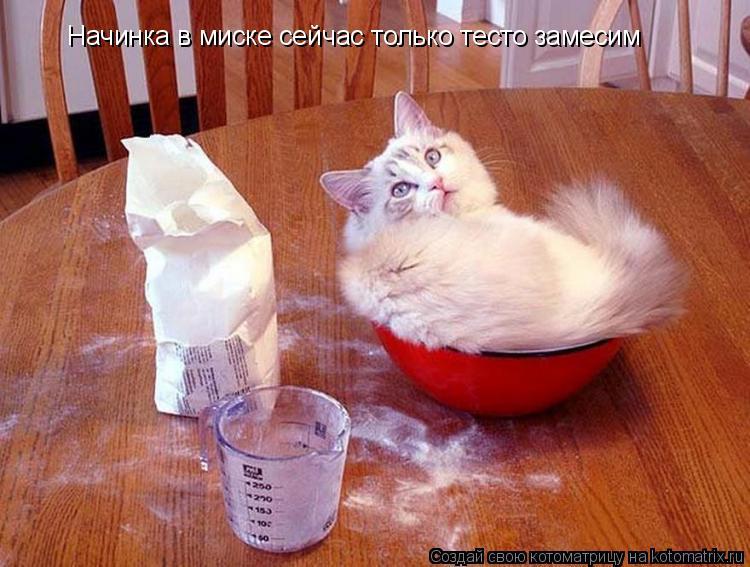 Котоматрица: Начинка в миске сейчас только тесто замесим