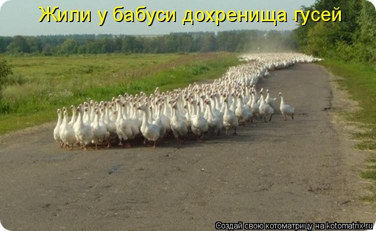 Котоматрица: Жили у бабуси дохренища гусей