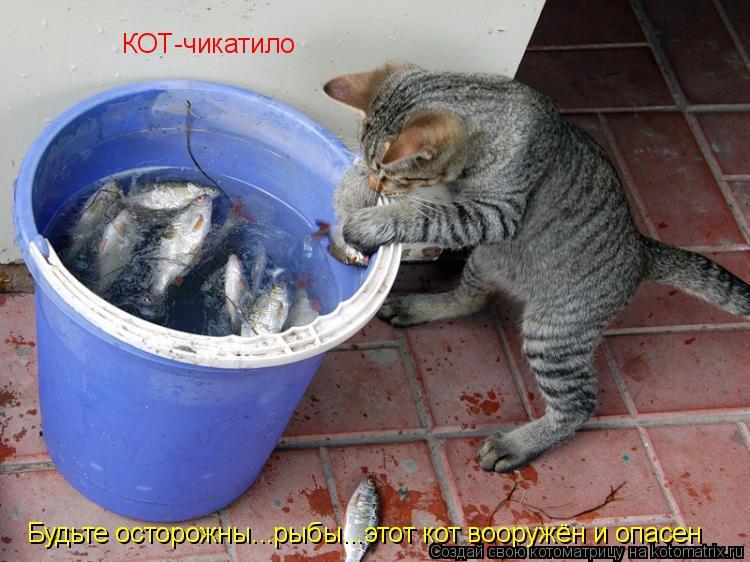 Котоматрица: КОТ-чикатило Будьте осторожны...рыбы...этот кот вооружён и опасен