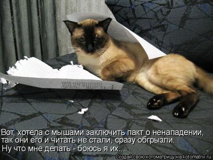 Котоматрица: Вот, хотела с мышами заключить пакт о ненападении, Ну что мне делать - боюсь я их... так они его и читать не стали, сразу обгрызли.