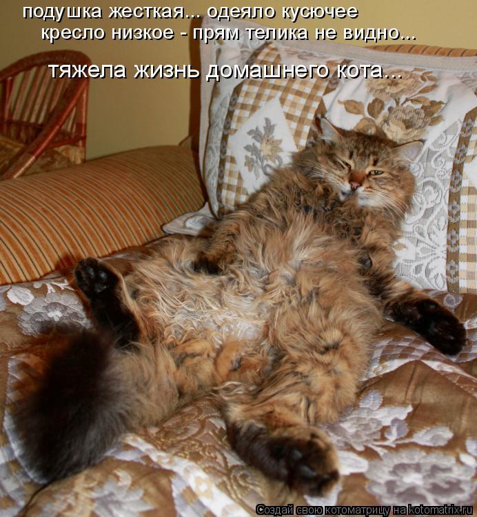 Котоматрица: подушка жесткая... одеяло кусючее кресло низкое - прям телика не видно... тяжела жизнь домашнего кота...