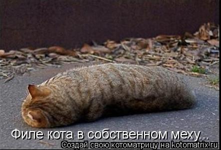 Котоматрица: Филе кота в собственном меху...