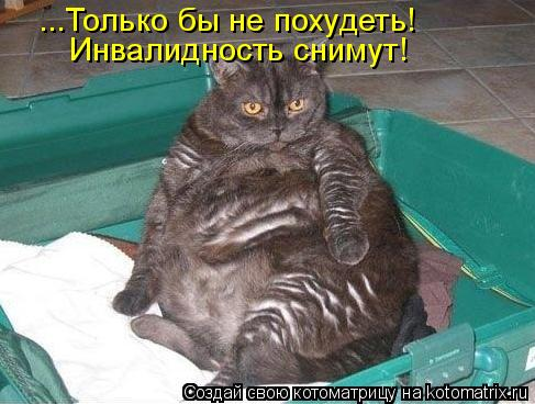 Котоматрица: ...Только бы не похудеть! Инвалидность снимут!