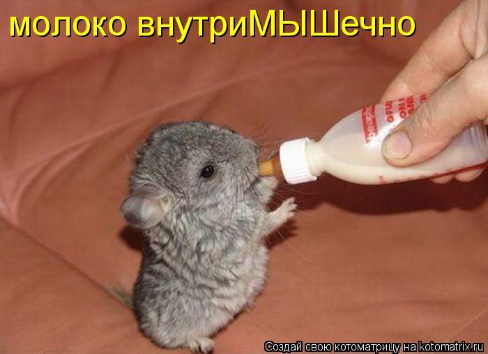 Котоматрица: молоко внутриМЫШечно
