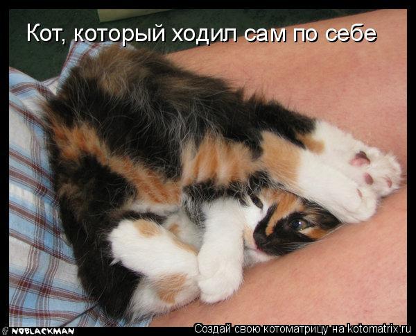Котоматрица: Кот, который ходил сам по себе