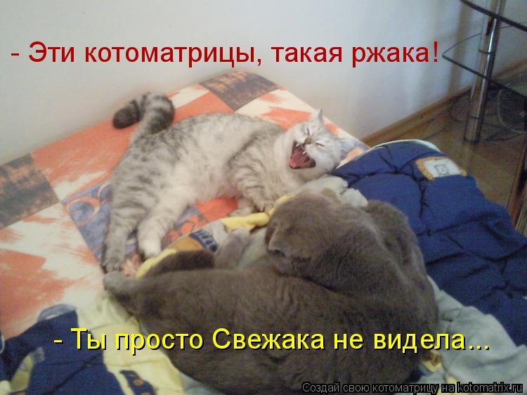 http://kotomatrix.ru/images/lolz/2010/04/06/536863.jpg