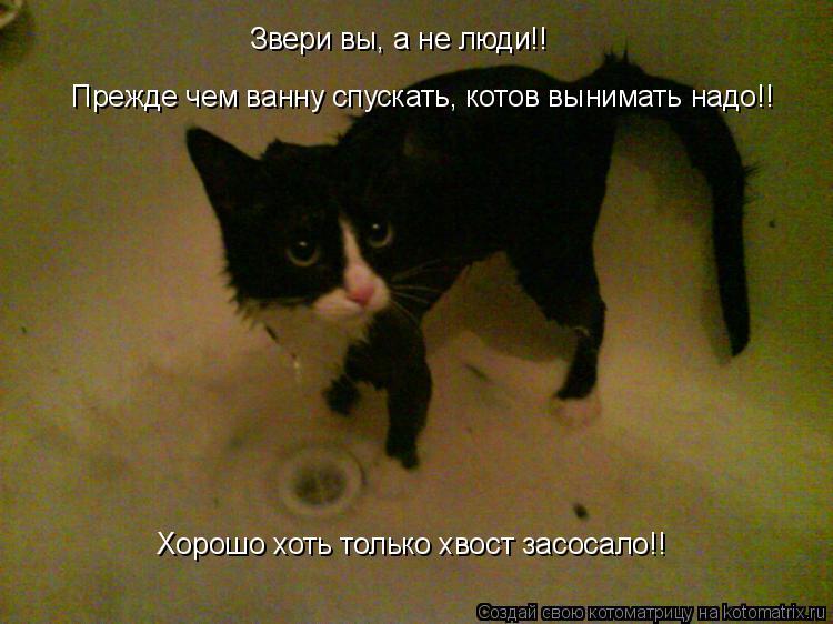 Котоматрица: Звери вы, а не люди!! Прежде чем ванну спускать, котов вынимать надо!! Хорошо хоть только хвост засосало!!