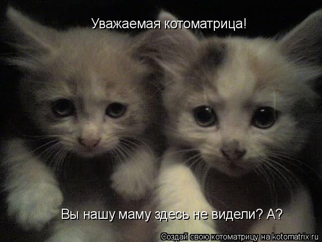 Котоматрица: Уважаемая котоматрица! Вы нашу маму здесь не видели? А?