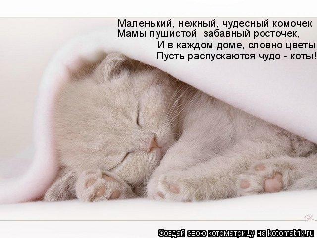 Котоматрица: Маленький, нежный, чудесный комочек Мамы пушистой  забавный росточек, И в каждом доме, словно цветы Пусть распускаются чудо - коты!