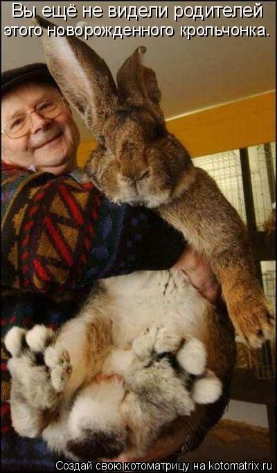 Котоматрица: Вы ещё не видели родителей  этого новорожденного крольчонка.