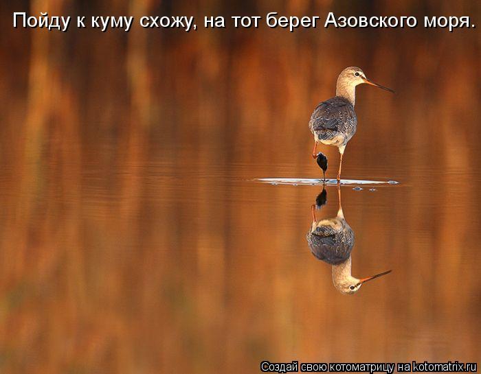 Котоматрица: Пойду к куму схожу, на тот берег Азовского моря.