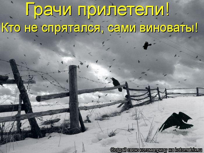 Котоматрица: Грачи прилетели!  Кто не спрятался, сами виноваты!