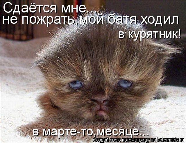 Котоматрица: Сдаётся мне... не пожрать,мой батя ходил в курятник! в марте-то,месяце...