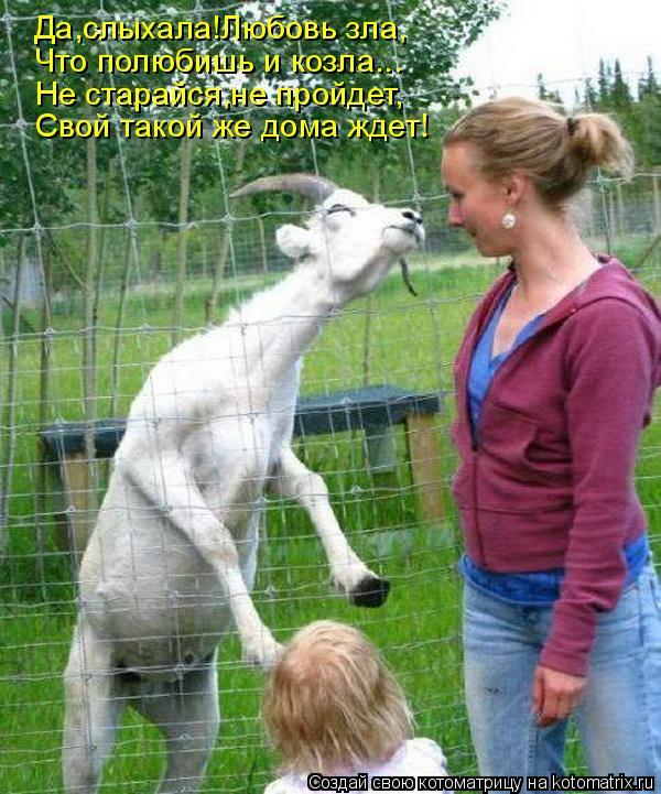 Котоматрица: Да,слыхала!Любовь зла, Что полюбишь и козла... Не старайся,не пройдет, Свой такой же дома ждет!