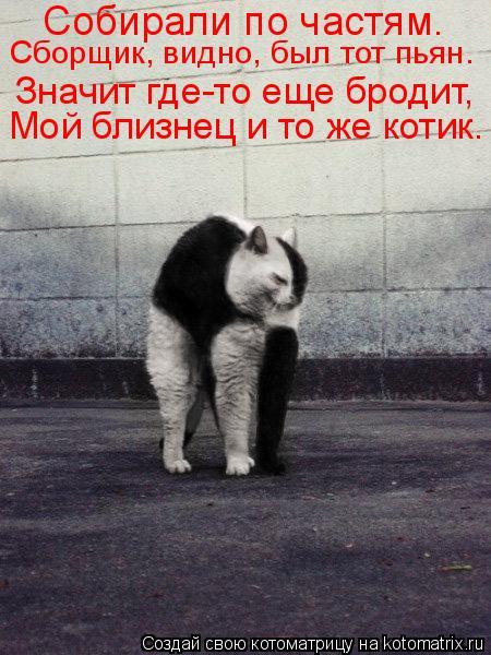 Котоматрица: Собирали по частям. Значит где-то еще бродит, Мой близнец и то же котик.  Сборщик, видно, был тот пьян.