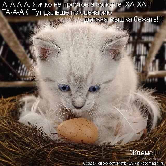 Котоматрица: АГА-А-А. Яичко не простое а золотое. ХА-ХА!!! ТА-А-АК. Тут дальше по сценарию  должна мышка бежать!!! Ждёмс!!!