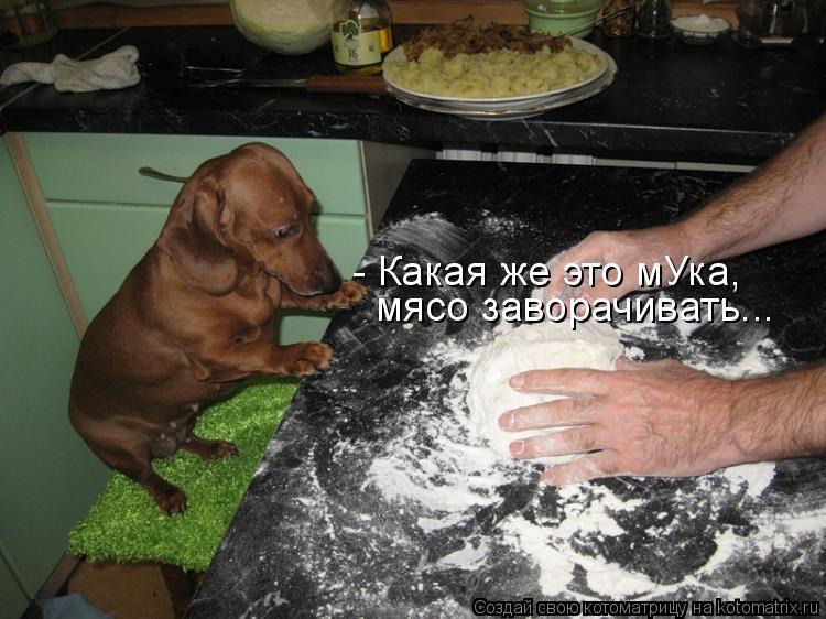 Котоматрица: - Какая же это мУка, мясо заворачивать...