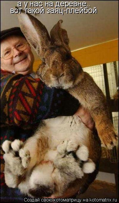 Котоматрица: а у нас на деревне.. вот такой заяц-плейбой