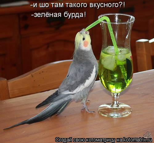 Котоматрица: -и шо там такого вкусного?! -зелёная бурда!