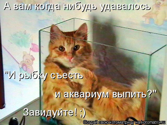 """Котоматрица: А вам когда нибудь удавалось """"И рыбку съесть  и аквариум выпить?"""" Завидуйте! ;)"""