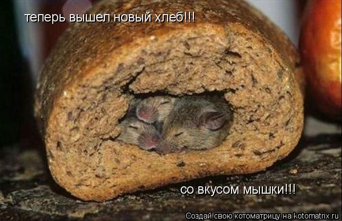 Котоматрица: теперь вышел новый хлеб!!!  со вкусом мышки!!!