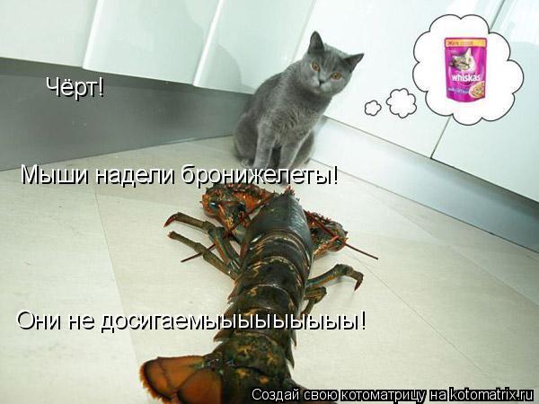 Котоматрица: Чёрт! Мыши надели бронижелеты! Они не досигаемыыыыыыыыы!