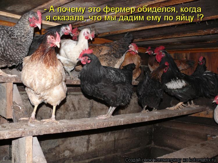 Котоматрица: - А почему это фермер обиделся, когда я сказала, что мы дадим ему по яйцу !?
