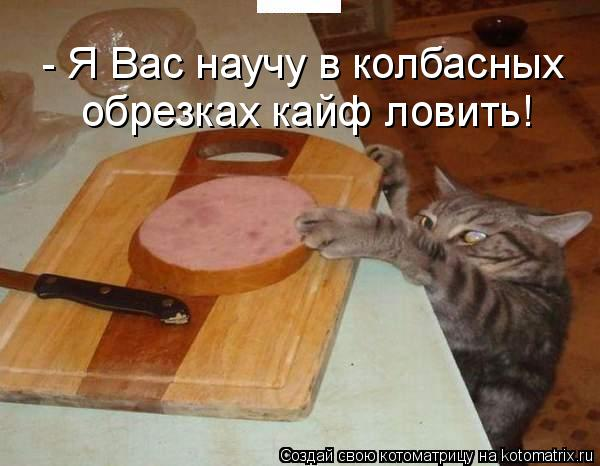 Котоматрица: - Я Вас научу в колбасных  обрезках кайф ловить!