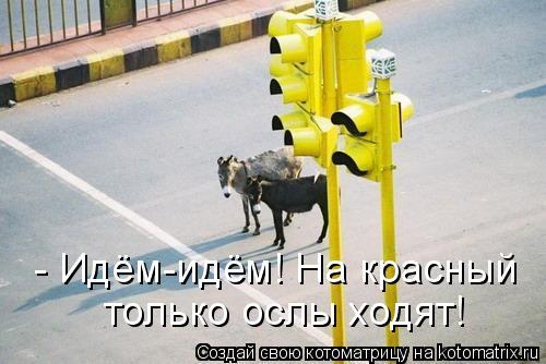 Котоматрица: - Идём-идём! На красный только ослы ходят!