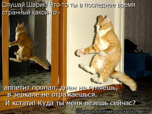 Котоматрица: в зеркале не отражаешься… И кстати! Куда ты меня везешь сейчас? Слушай Шарик! Что-то ты в последнее время  странный какой-то -  аппетит пропал