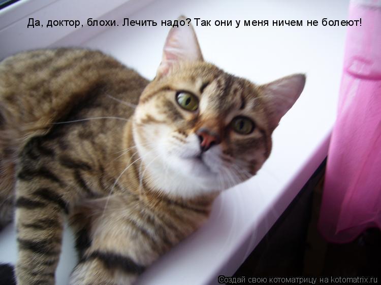Котоматрица: Да, доктор, блохи. Лечить надо? Так они у меня ничем не болеют!