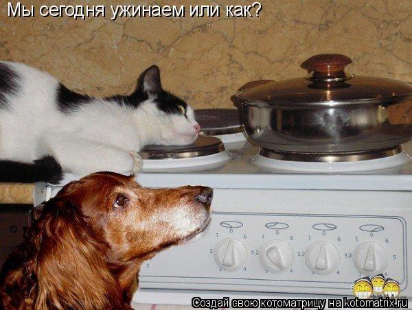Котоматрица: Мы сегодня ужинаем или как?