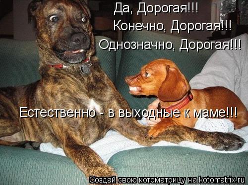 Котоматрица: Да, Дорогая!!! Конечно, Дорогая!!! Естественно - в выходные к маме!!! Однозначно, Дорогая!!!
