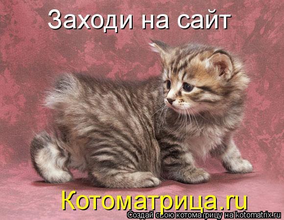 Котоматрица: Заходи на сайт Котоматрица.ru