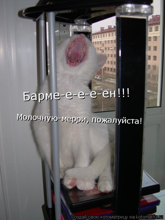 Котоматрица: Барме-е-е-е-ен!!! Молочную-мерри, пожалуйста!