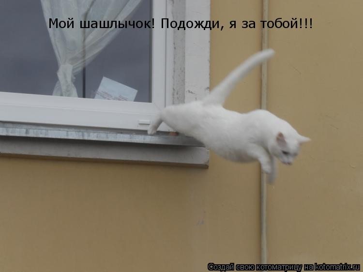 Котоматрица: Мой шашлычок! Подожди, я за тобой!!!