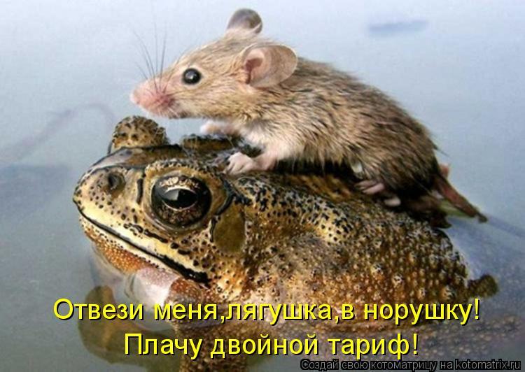 Котоматрица: Отвези меня,лягушка,в норушку! Плачу двойной тариф!