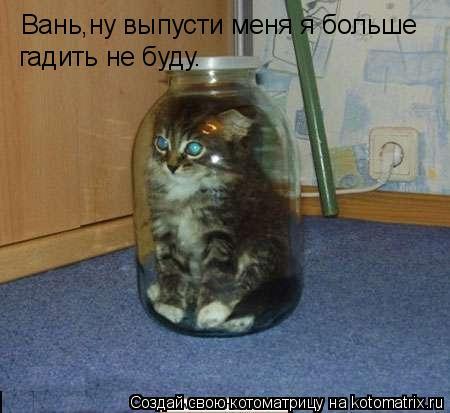 Котоматрица: Вань,ну выпусти меня я больше гадить не буду.
