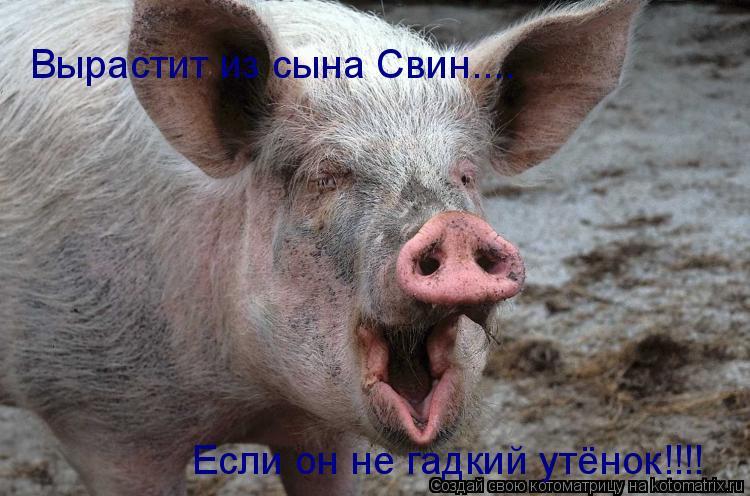 Котоматрица: Вырастит из сына Свин.... Если он не гадкий утёнок!!!!